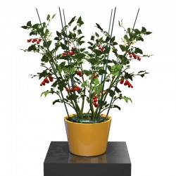 The Ultimate Plant Cage, one of the newest plant cages to hit the market.