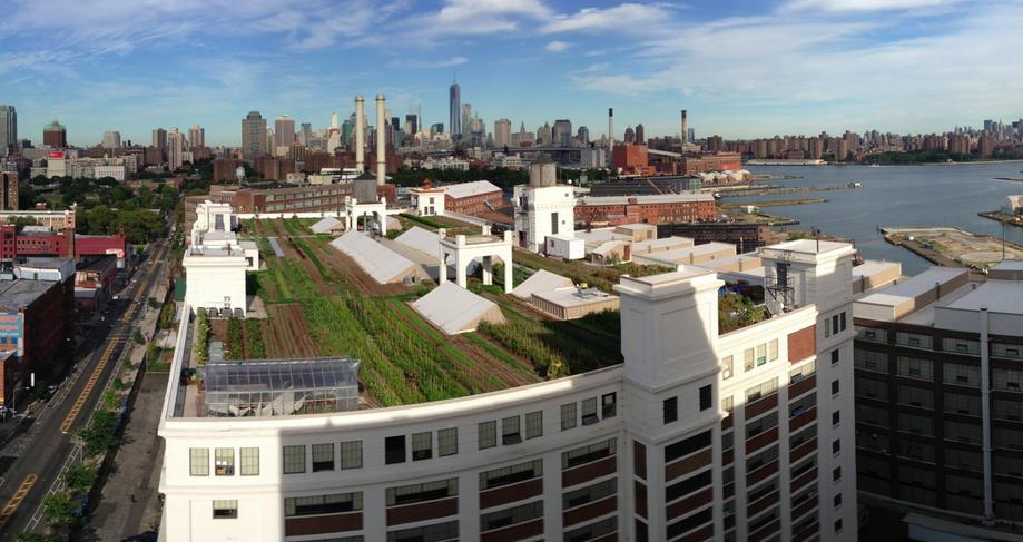 brooklyn grange rooftop