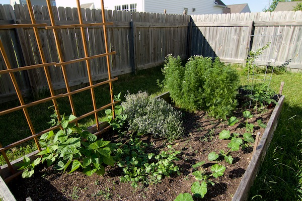 How to grow vegetables in a small space global garden friends inc - Growing vegetables in a small space concept ...