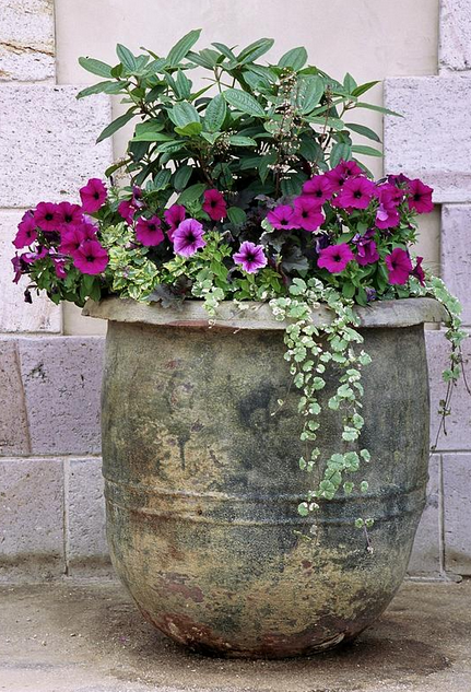 Planter ideas for your garden patio global garden for Garden planter ideas