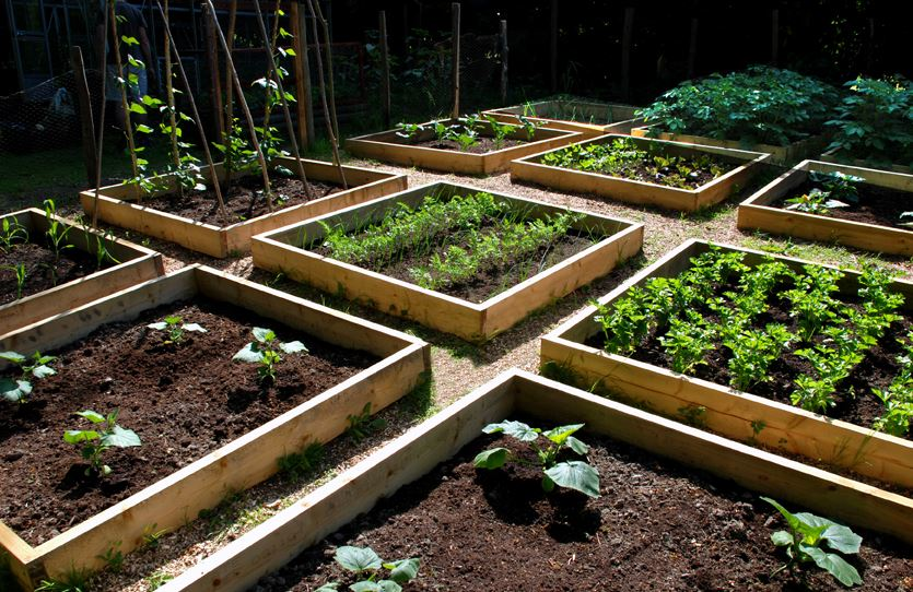 Planning Plants How to Organize a More Productive Vegetable Patch 1
