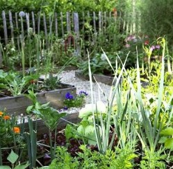 Guide to Vegetable Garden Pests: Identification and Natural Control Tips