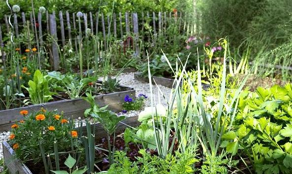 Planning plants how to organize a more productive for Veggie patch design