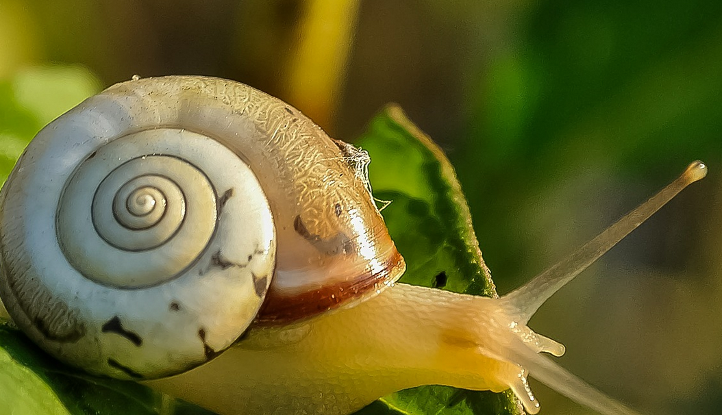 How to Combat Snails in Your Flower Beds | Global Garden ...