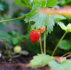 Green Thumb 101: Top Tips for Ensuring Your Garden Is Truly Organic