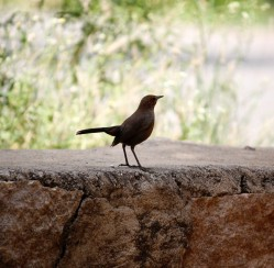 Fly Away! How to Keep Birds out of Your Garden