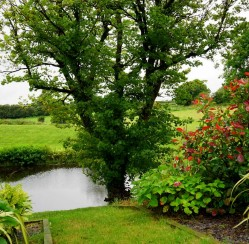 Few Simple Steps to Create Own Gardening Blog