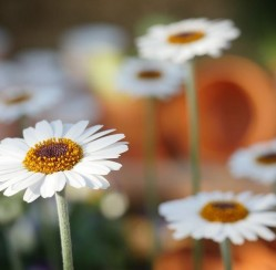 Garden Creation: How Professionals Display Their Favorite Flowers