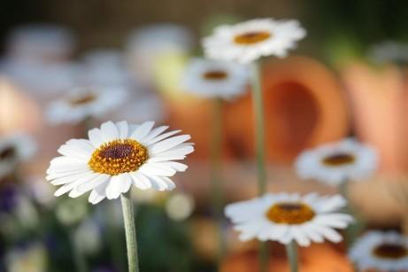 GardenCreation