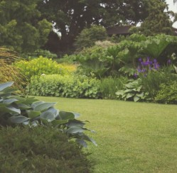 Tired of Lawn Maintenance? Use Native Plants to Save You Time