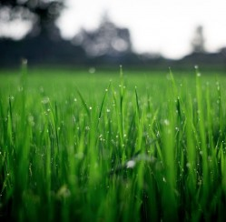 The Grass Can be Greener in Your Own Front Yard: Keeping Your Lawn Healthy