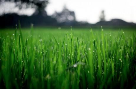 TheGrassCanbeGreenerinYourOwnFrontYardKeepingYourLawnHealthy_pexels_grass