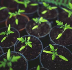 Green Thumb: 4 Tips for Starting Your First Garden This Spring