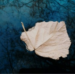 Why the Leaves on Your Trees are Growing Pale