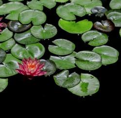 Anxiety Zen Space: 4 Ways to Create a Relaxing Backyard
