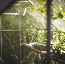 How to Create a Brilliant and Beautiful Greenhouse This Summer