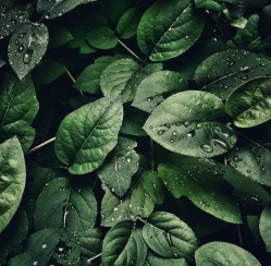 4 Eco-Friendly Water Sources for Your Garden and Yard