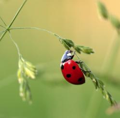 4 Cheery Bugs That Actually Help Your Garden
