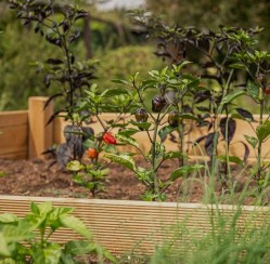 4 Steps in Creating Your Own Raised Garden in Your Yard