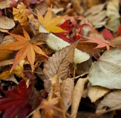 Fall Leaves: How to Prep Your Yard and Garden for Winter