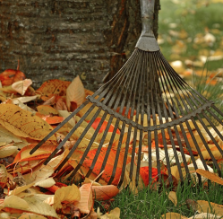 4 Essential Steps in Rehauling Your Yard Before Winter