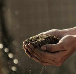 Why Using Natural Fertilizers Is Better for Your Garden