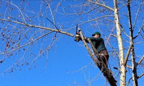 4WinterPruningTipsforMaintainingHealthyTrees