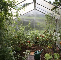 How to Build a Backyard Greenhouse for Year-Round Gardening