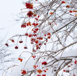 How to Protect Young Trees During the Winter