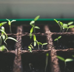 Commercial Gardening: How to Keep Your Crops Healthy