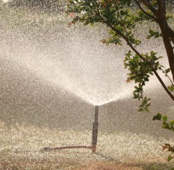 How to Set Up a Garden Irrigation System for Plants with Different Watering Needs