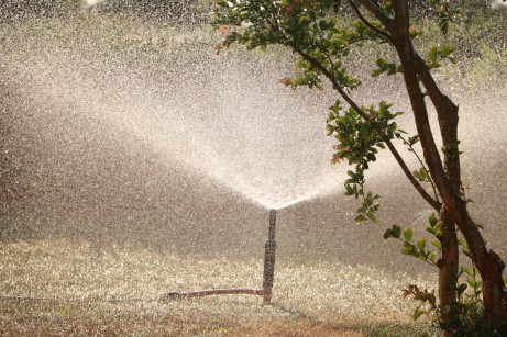 How to Set Up a Garden Irrigation System for Plants With Different Watering Needs (1)