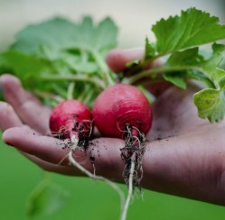 Plant Your Own Produce: 5 Tricks for Growing Your Family's Food