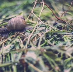 5 Springtime Garden Pests to Watch Out For