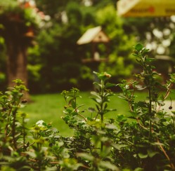 How to Fix Issues with Standing Water in Your Garden