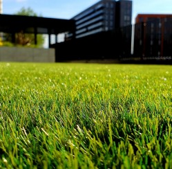 4 Ways to Keep Your Lawn Healthy in 2020