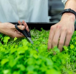 Miniature Garden: 4 Ideas for Growing Herbs at Home