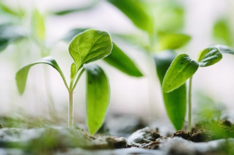 3 Problems That May Be Stunting Your Garden's Growth (1)