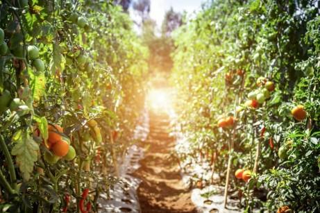 4 Pieces of Equipment Every Serious Gardener Needs on Hand (1)