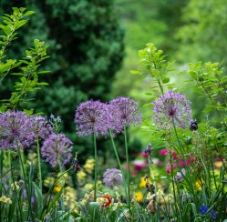 Grooming Your Garden: How to Maintain a Pristine Look