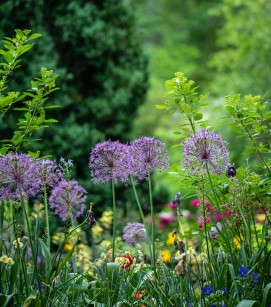 Grooming Your Garden How to Maintain a Pristine Look