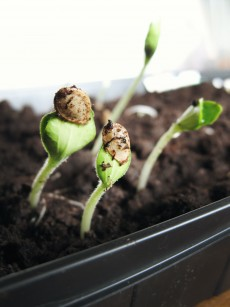 4 Ways to Maintain and Protect an Indoor Garden
