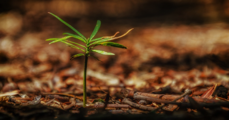 4 Ways to Make Sure Your Young Trees Are Getting the Nutrients They Need to Grow
