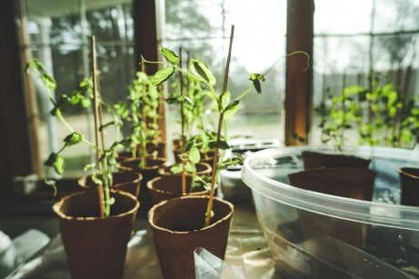 Why Planning for Spring Gardening During Winter is Advantageous