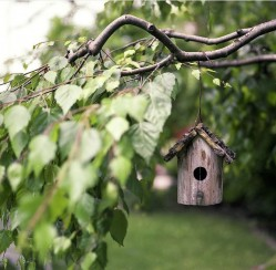 Transplanting a Tree or Two? How to Reimagine Your Yard