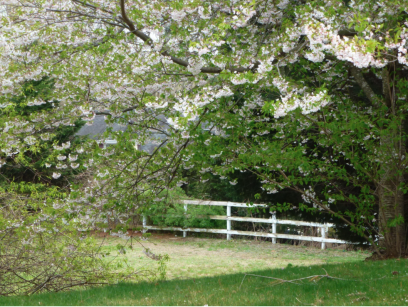 Trees on Your Property Becoming a Hassle_ Here's How to Deal With Them