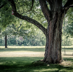 Signs That the Old Tree in Your Yard Needs to Go ASAP