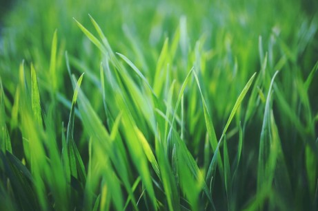 How to Get Your Lawn to Look Fresh and Green This Spring