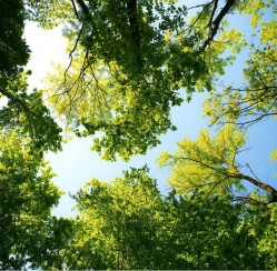 How to Treat Your Trees Now That Spring Has Sprung