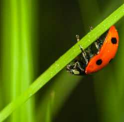 Which Insects Are Good for Your Garden and Which Do You Need to Get Rid of ASAP?